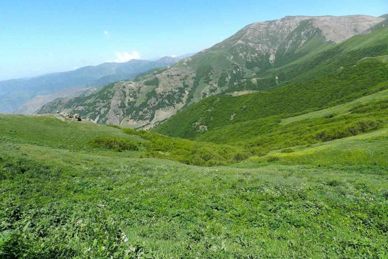 طبعیت شهرستان ورزقان - جنگل های چیچکلی