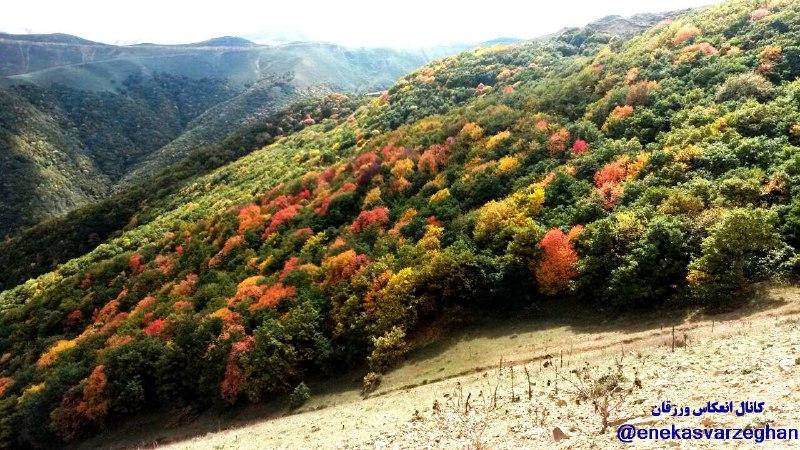 جنگل های حسن آباد