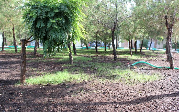 پارک توسعه شهرک ارم تبریز